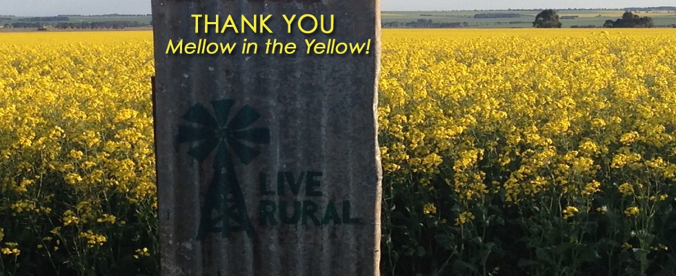 THANK YOU Mellow in the Yellow!